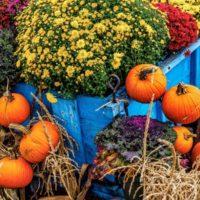 785318276957-pumpkin-market-autumn-crysanthemum-corn-fall
